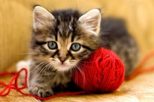 Pussydo_Cat_Litter_wood_pellet_kitten_playing_red_health_cat_litter