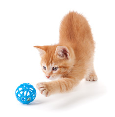 ginger cat and ball